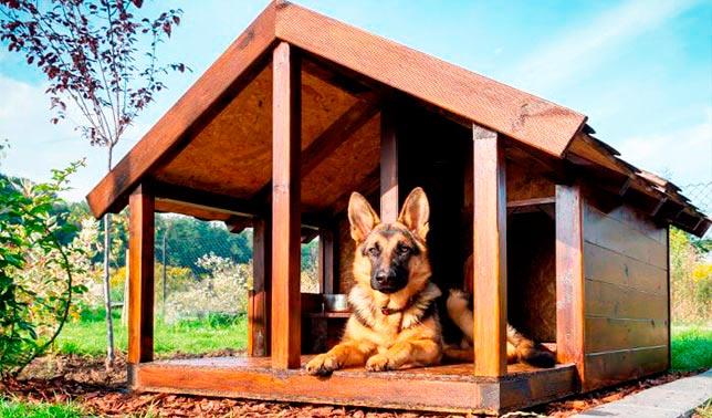 casetas para perros grandes