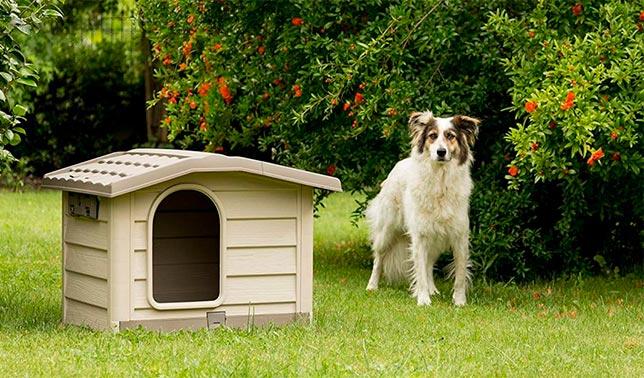 casetas para perros medianos