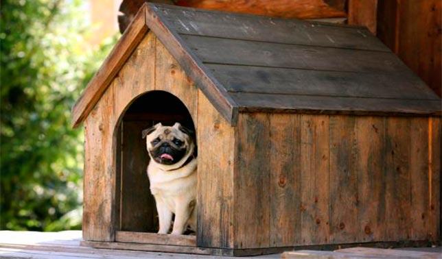 casetas para perros pequeños pug