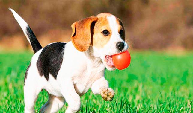 como adiestrar a un perro cachorro