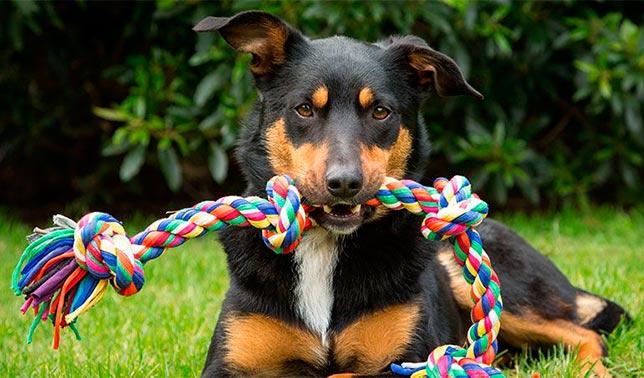 regalos para perros originales